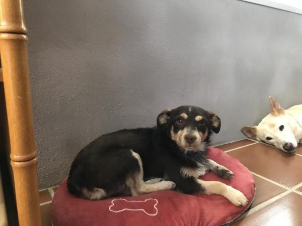 Sona perra adopcion porpatas granada recogida 22-06-2018 (3)