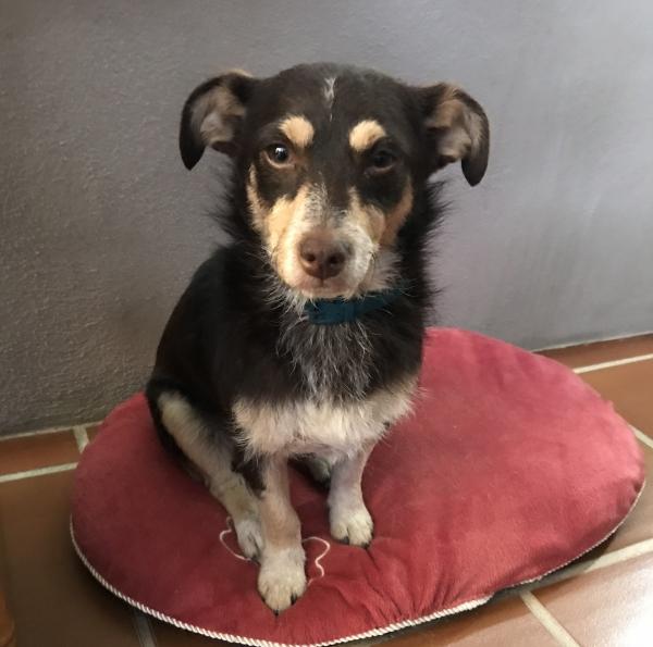 Sona perra adopcion porpatas granada recogida 22-06-2018 (4)