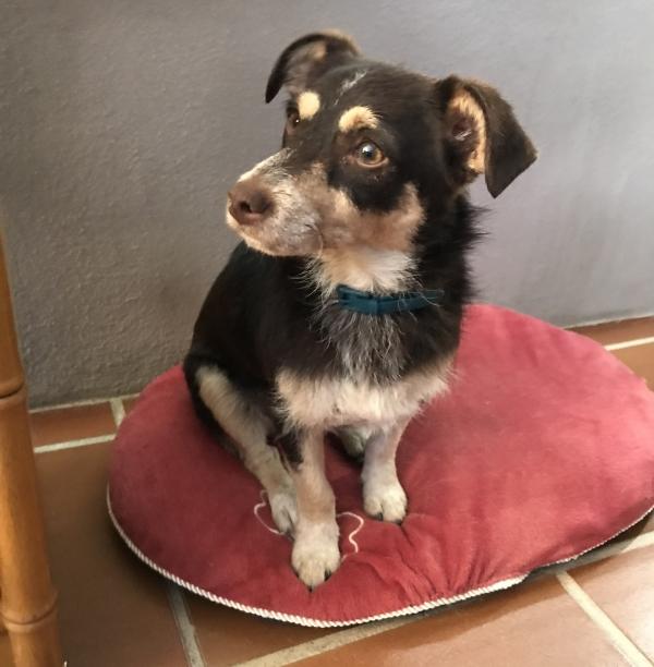 Sona perra adopcion porpatas granada recogida 22-06-2018 (5)