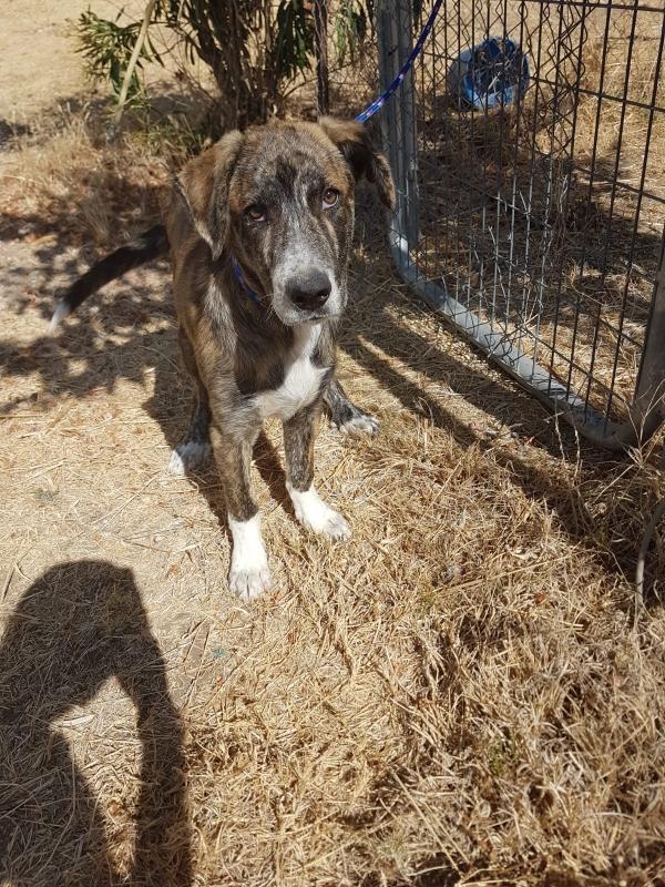 02-08-2019-troncho-perro-adopcion-porpatas-granada-1