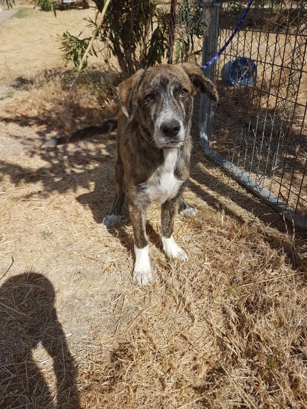02-08-2019-troncho-perro-adopcion-porpatas-granada-4