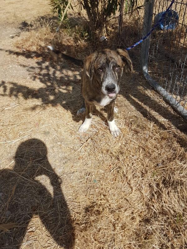 02-08-2019-troncho-perro-adopcion-porpatas-granada-6