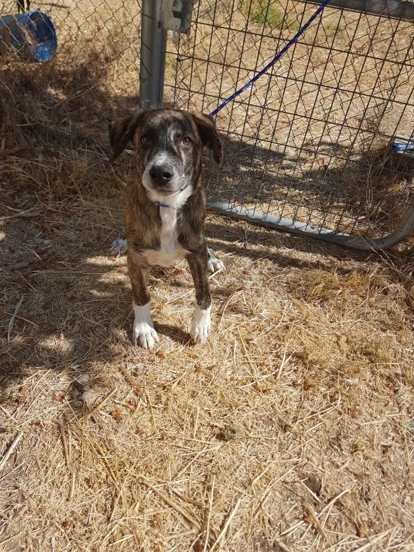 02-08-2019-troncho-perro-adopcion-porpatas-granada-8