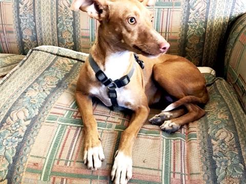 Valeria perra adopcion porpatas oct2017 (2)